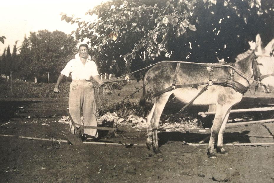1943- בלהה ישראלי חורשת עם חמור קפריסאי ומכינה את חלקת הירקות בחצר. בעלה מגויס לצבא הבריטי.
