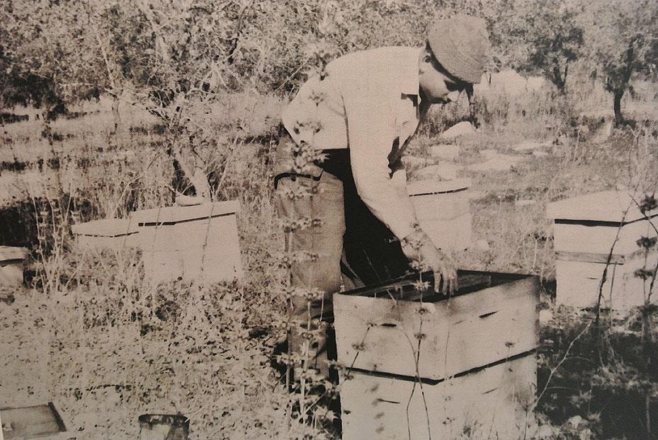 שנות ה70 - ישראל צ'רצ'יס עובד במכוורת