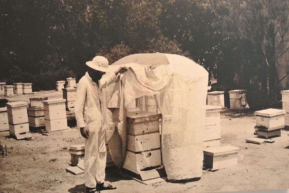 שנות ה-70- עמרם צ'רצ'יס עובד במכוורת.