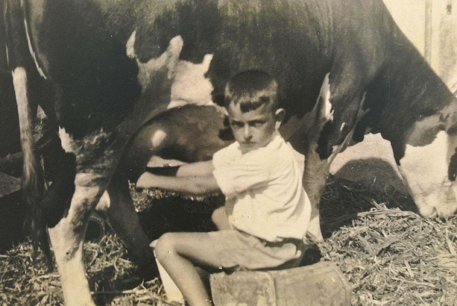 1943 - איתן ישראלי חולב את הפרה